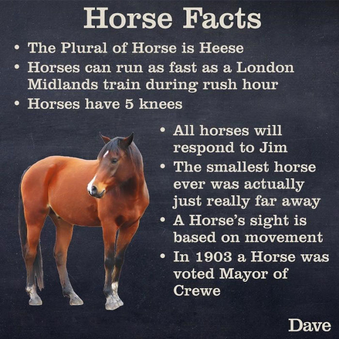 horse facts funny