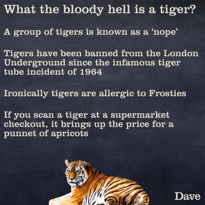 new weird tiger facts