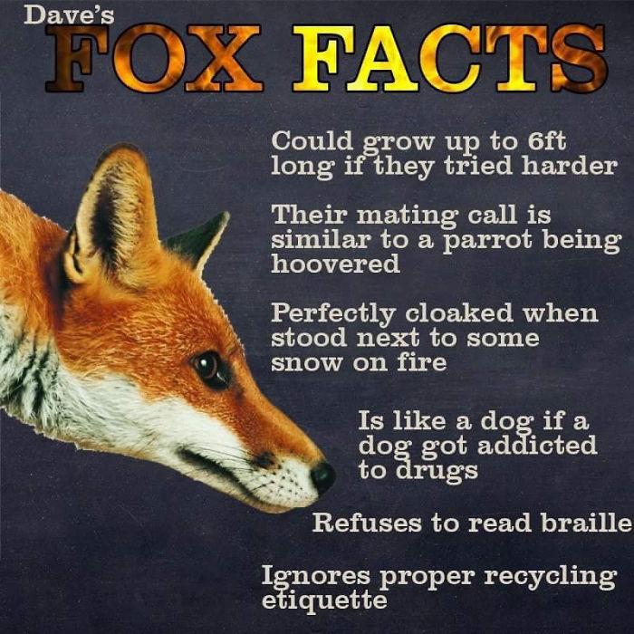 fox facts animals