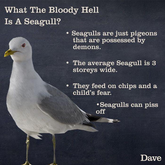seagull fun facts