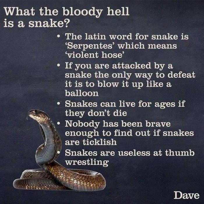 strange snake facts