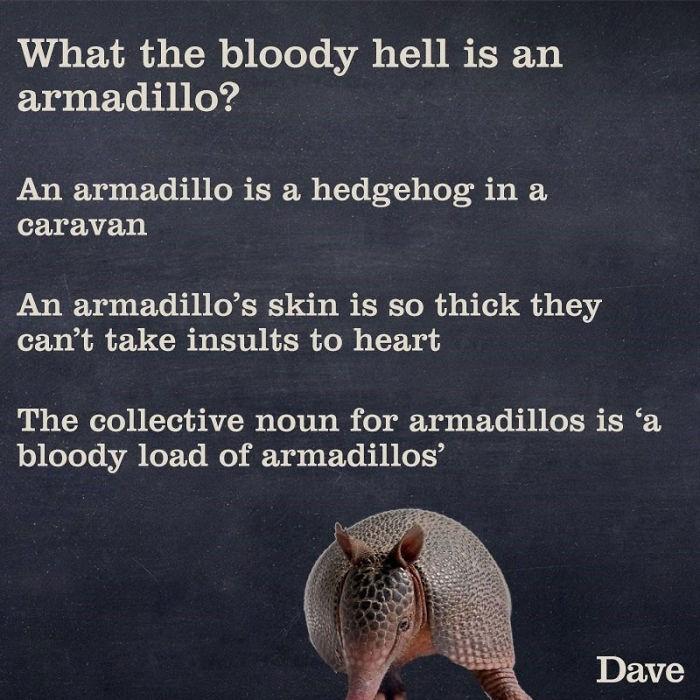 armadillo weird facts