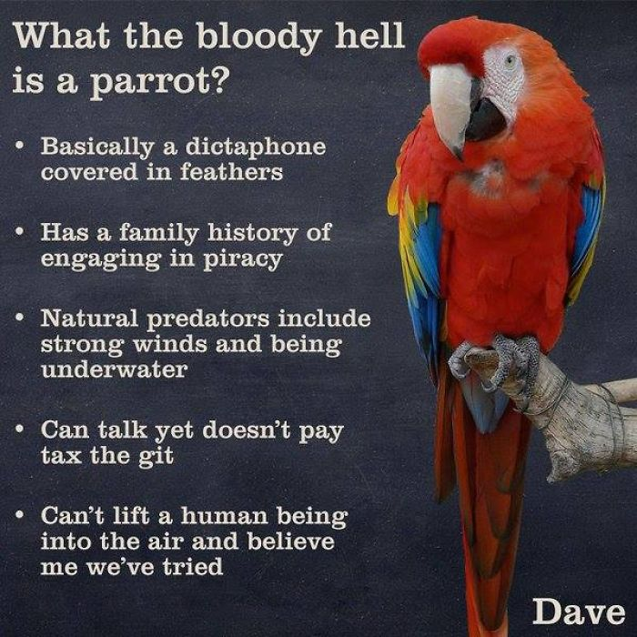 parrot facts 2020