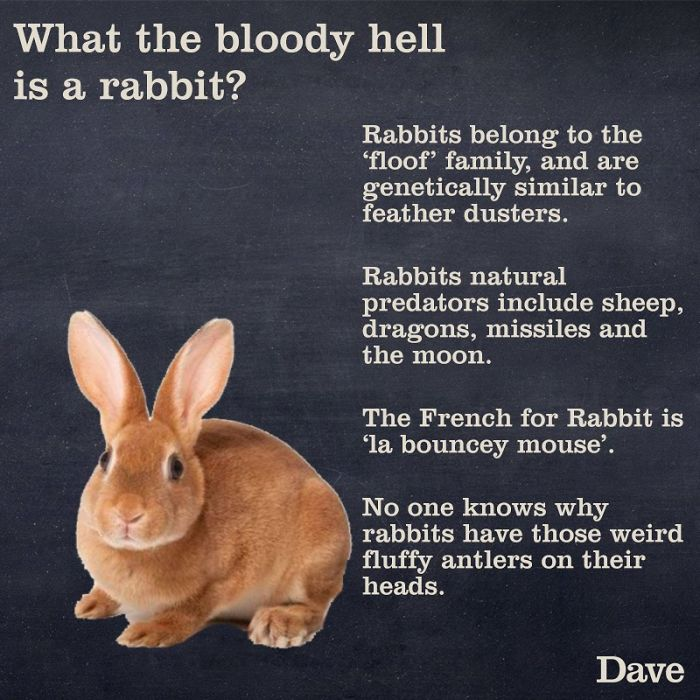 funny rabbit facts