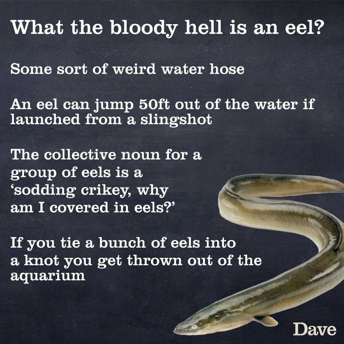 facts about eels