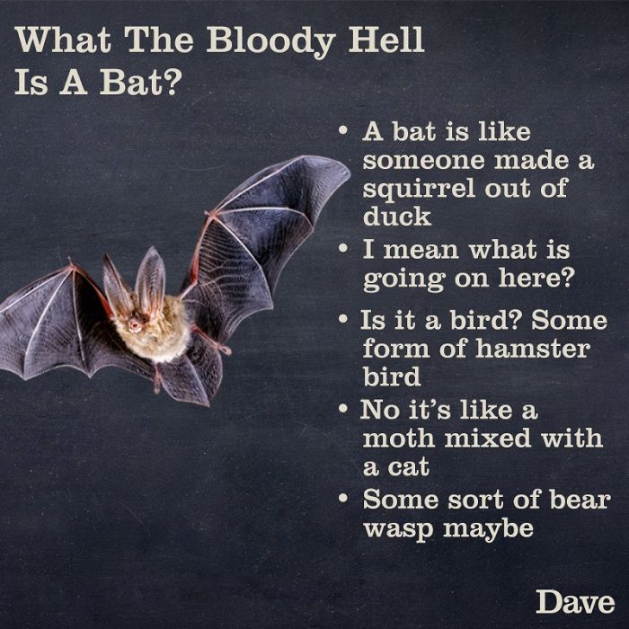 crazy facts about bats