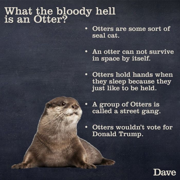 Otter facts hilarious