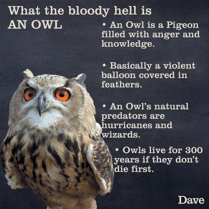 owl fun factors