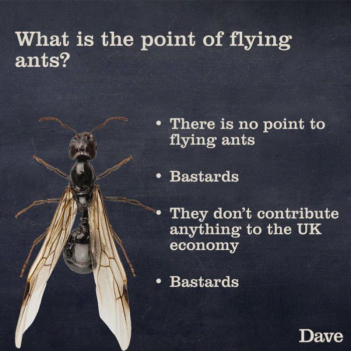 flying ants ridiculous facts