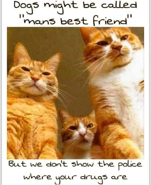 cat photo captions 2020