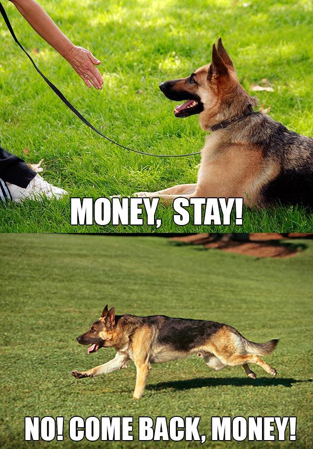animal captions pics