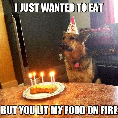 funny captions for dogs